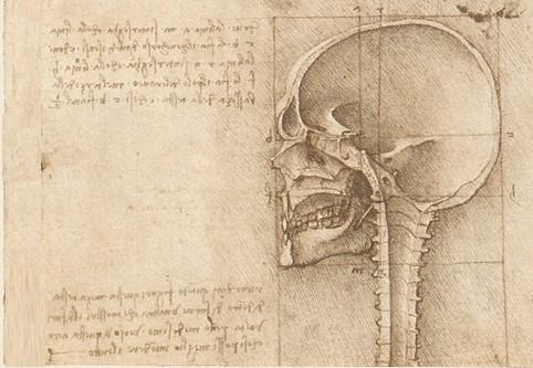 Skelett (2)